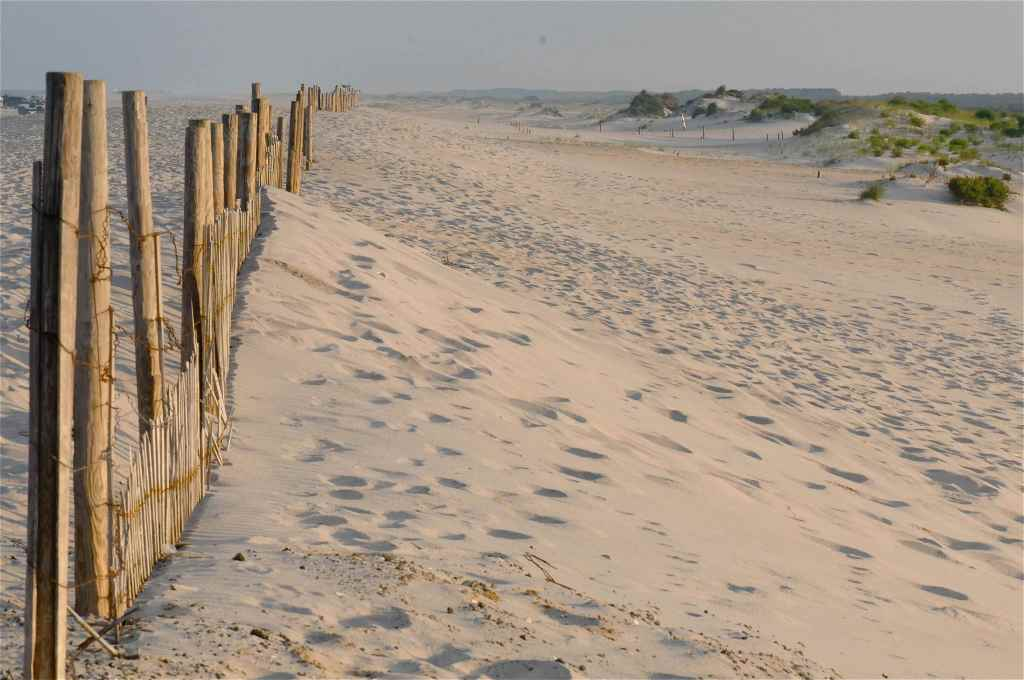 218Assateague dunes