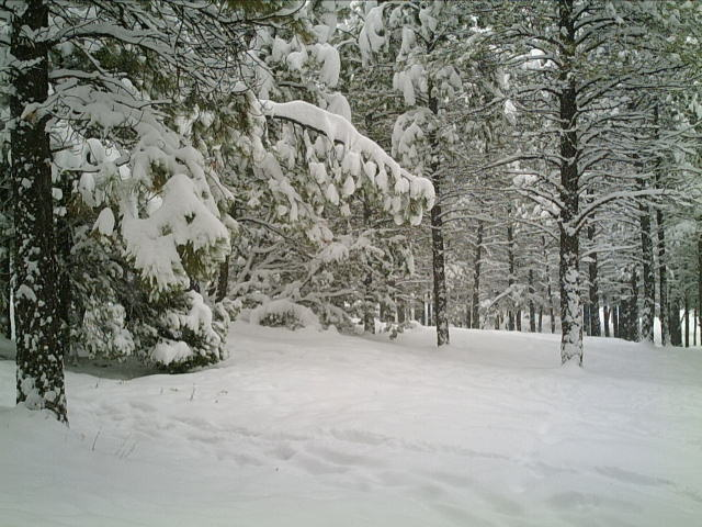 first snow006